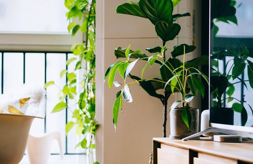 Indoor Office Plant Hire